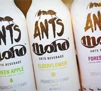 Foto: Moho Elderflower, la bebida de las hormigas