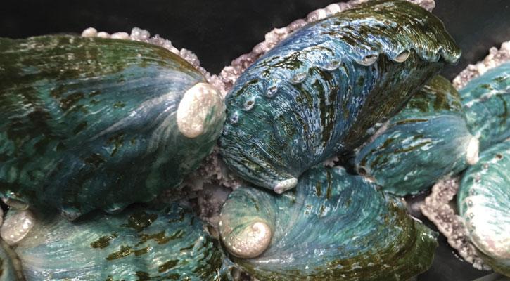 Foto: Abalón, el molusco de moda