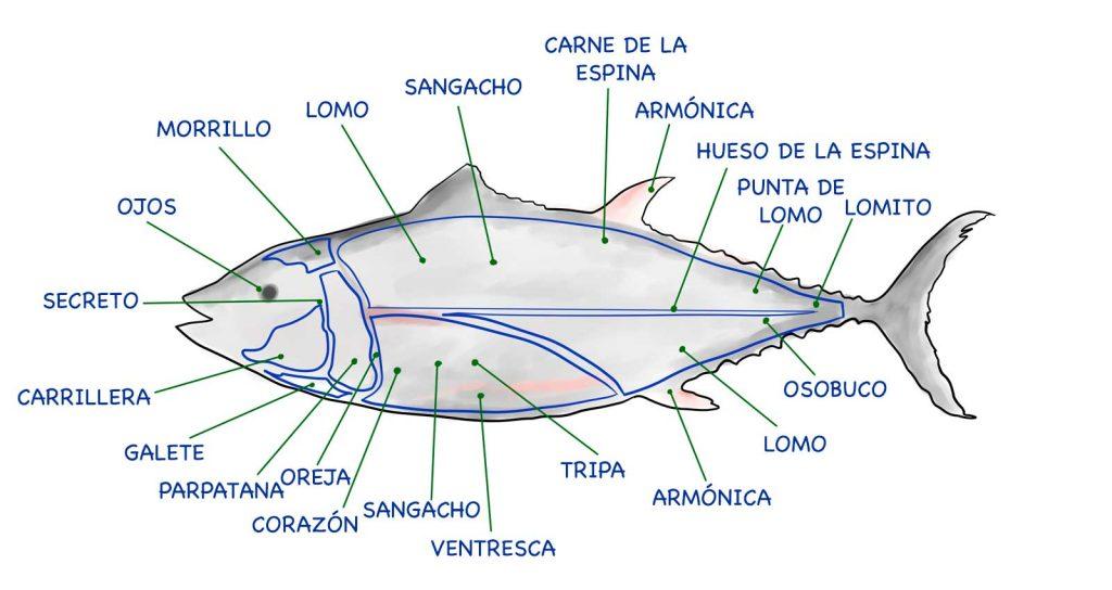 Despiece del atún