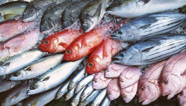 Consejos para conservar y cocinar pescado en casa - Gastroactitud. Pasión  por la comida